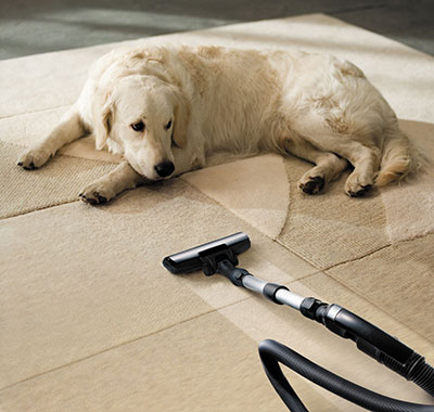 Pet Hair Cleaning Services in California